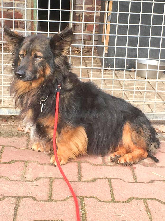 Hund Toffy