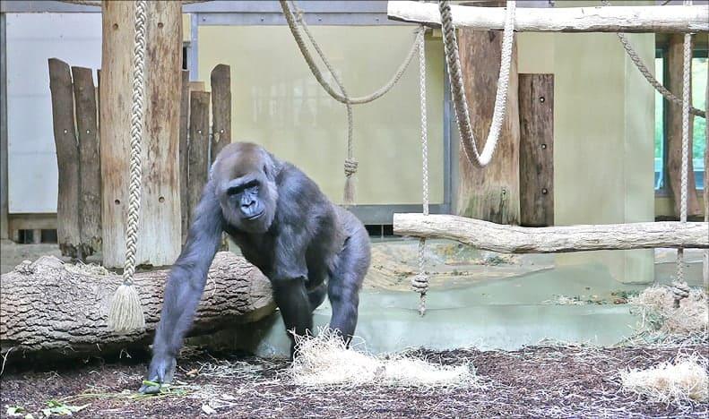 Wo Mensch auf Affe trifft