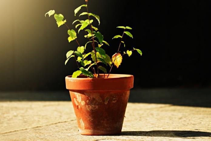 Blumentopf mit Pflanze