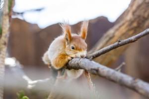 Eichhörnchen auf Seilen sicherer unterwegs