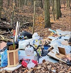 Wald wird zur Müllhalde