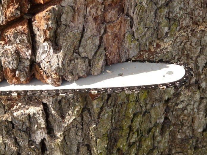 Kettensäge an einem Baumstamm