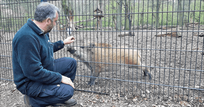 Mann und Wildschwein