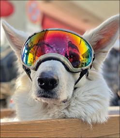 Hund mit verspiegelter Skibrille auf den Augen